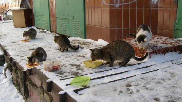 Мороз і безпритульні тварини на вулиці