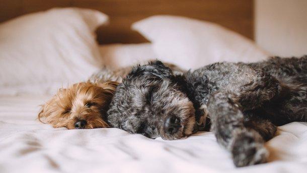 Пес зрадів подарунку. Фото: pixabay
