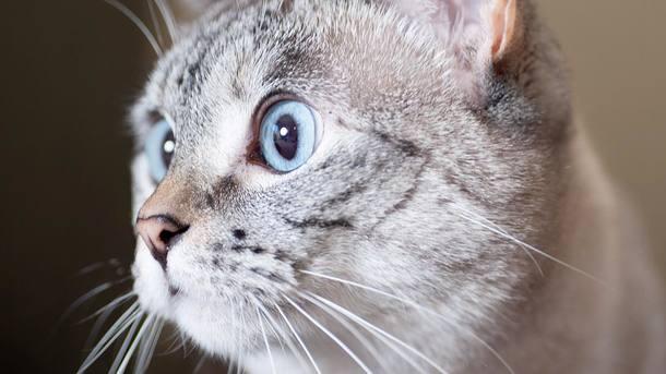Кошка Нола. Фото: instagram.com/nala_cat
