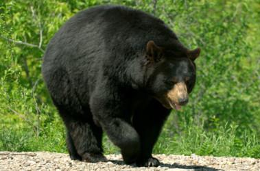 Канада марихуана медведи сталин конопля