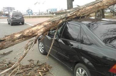 На Соломенке. Одно авто пострадало сильно, у другого поврежден бампер. Фото: autoua.net