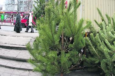 Мы узнали, где купить елку подешевле