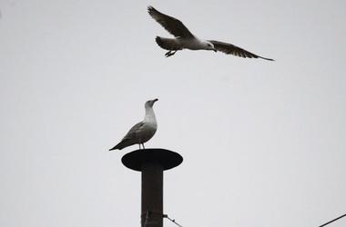 Сикстинские чайки, фото Reuters