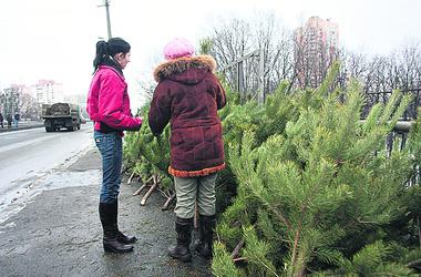 Цены на новогодние деревья в Киеве колеблются от 40 до 120 гривен за метр