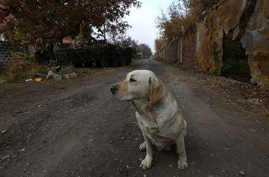 Животному найдут новый дом. Фото: Н. Рец