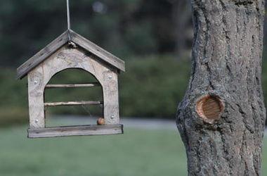 Птицы в городе нуждаются в подкорме